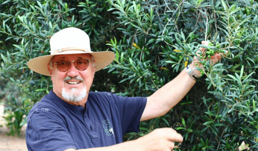 Chcete vědět, kde se pěstují raw olivy pro Lifefood?