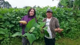 Jakonový sirup: Jak roste v Peru naše zdravé slazení?