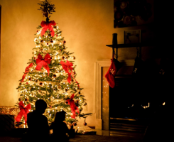 Living Christmas tree - sustainability at Christmas time