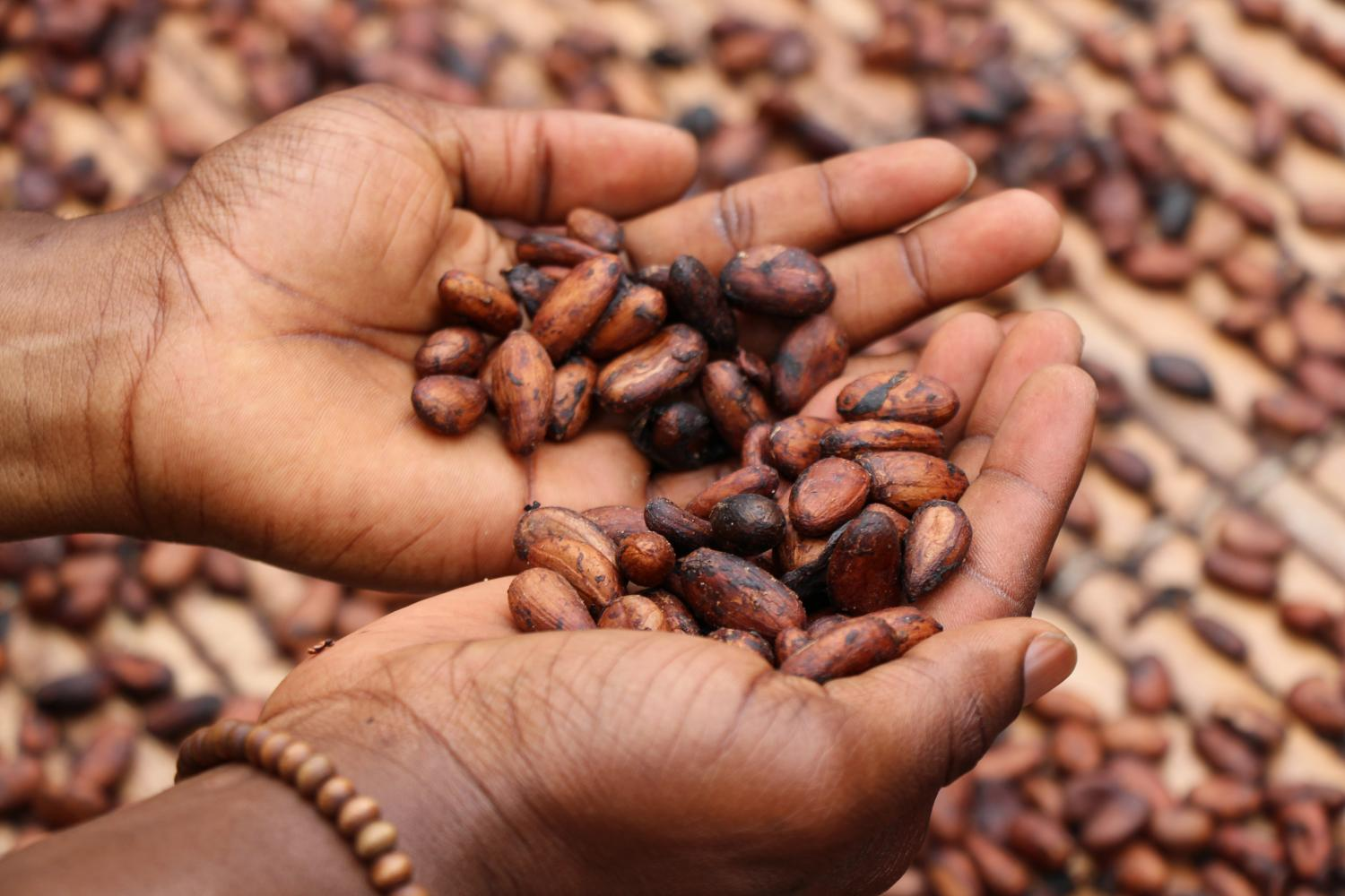 Cacao is a superfood