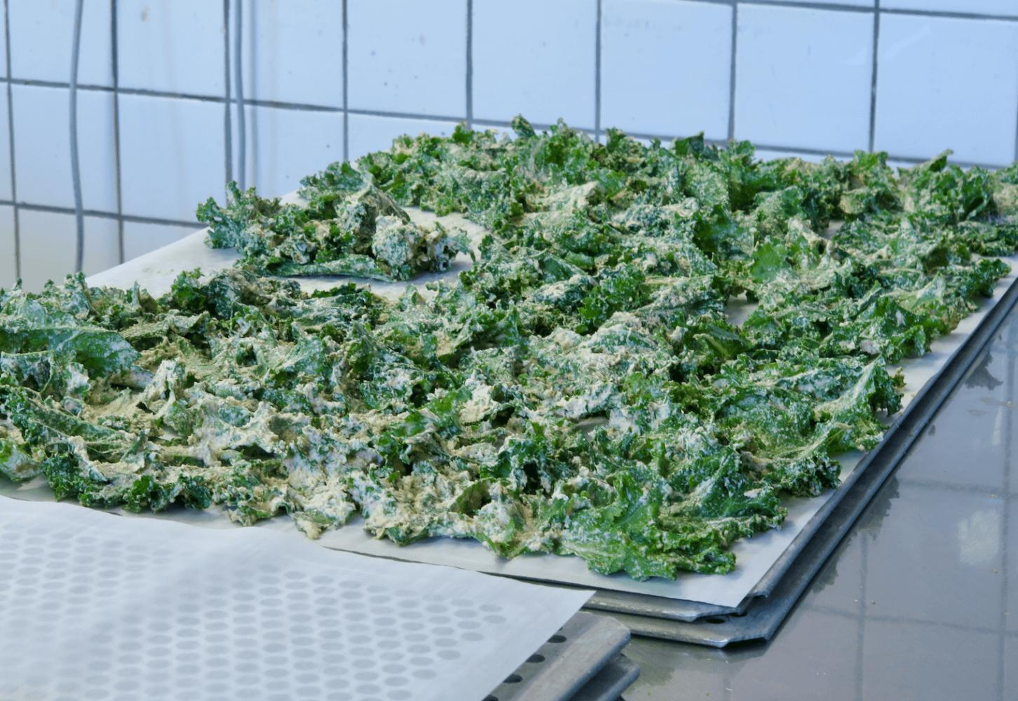 Výroba kadeřávkových chipsů v Lifefoodu